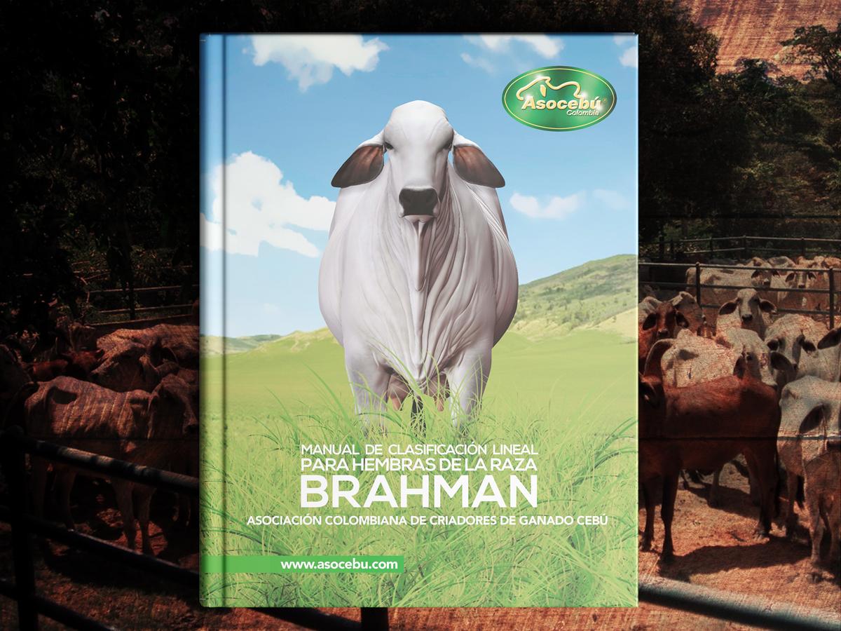 Manual de Clasificación Lineal para Hembras de la Raza Brahman
